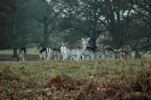 Deer Park Powderham Castle