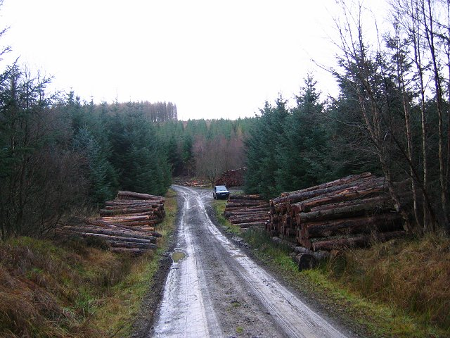 Yair Forest.