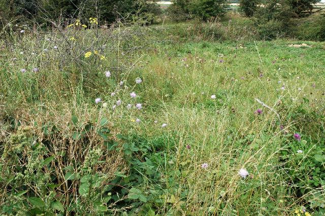 Magnesian Limestone grassland near Newthorpe