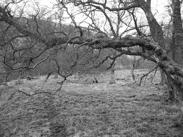 Birchwoods, Glenkinnon.