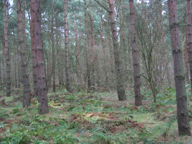 Hedderwick Hill Plantation.
