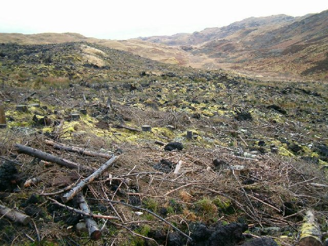 Cleared forestry near Salachary