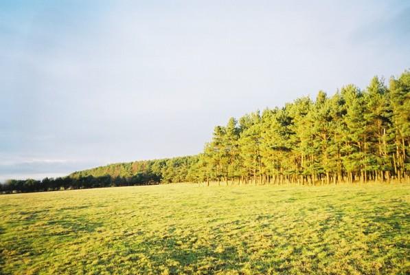 Carmoor Wood