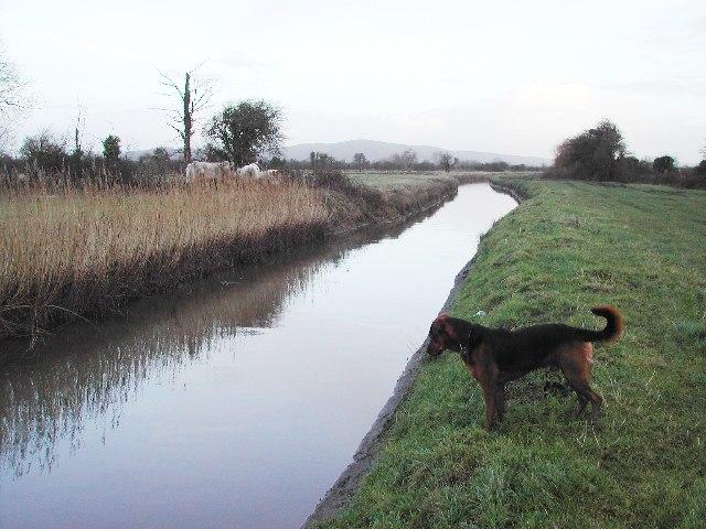 Rhyne draining Puxton Moor