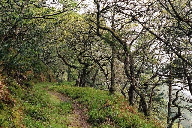 Oare: Culbone Wood