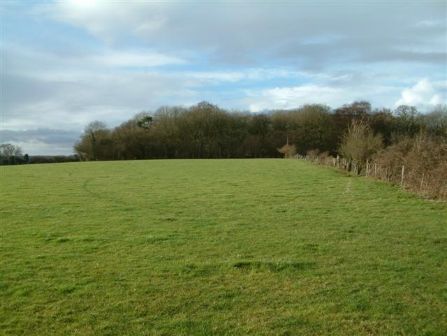 Marvel Row Copse