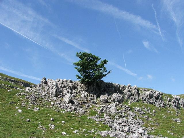 Tree growing out of limestone rocks.