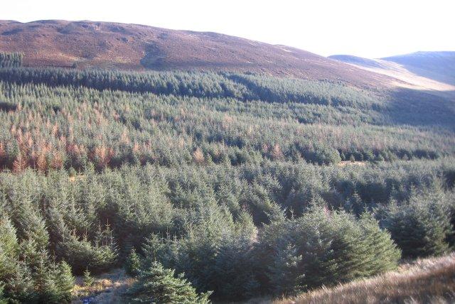 Hobcarton Forest.