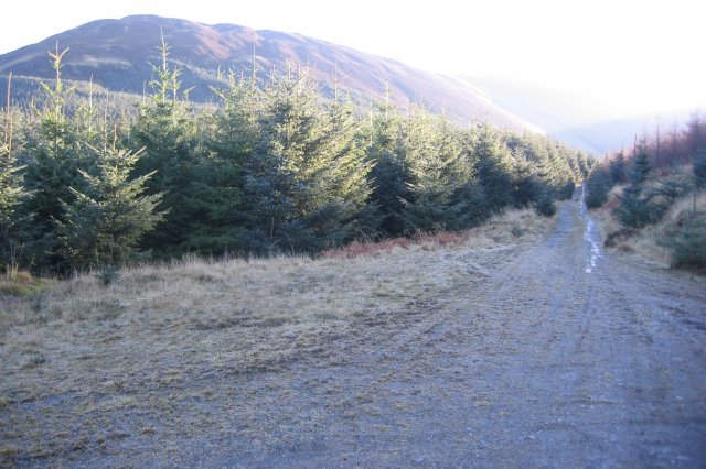 Hobcarton Forest Track.