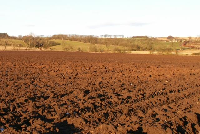 Farmland by Balmain
