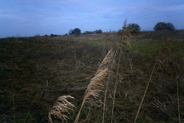 Grasses on Metheringham Delph