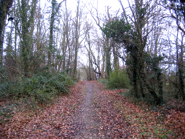 Long Road plantation, Comberton, Cambs