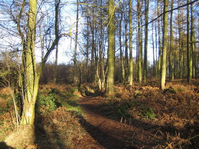 Meriden Shafts Wood
