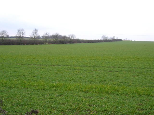 Farmland, Comberton, Cambs