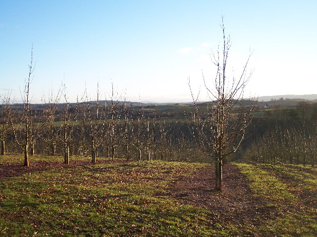 Recent Orchard on the site of Moorend Coppice