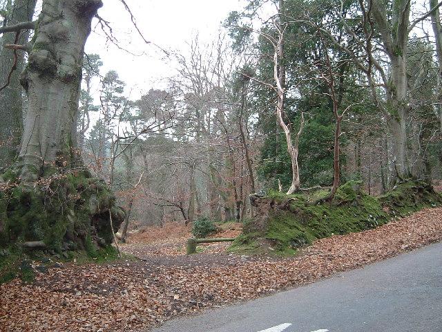 Crook Horn Hill; near the Cattle Grid