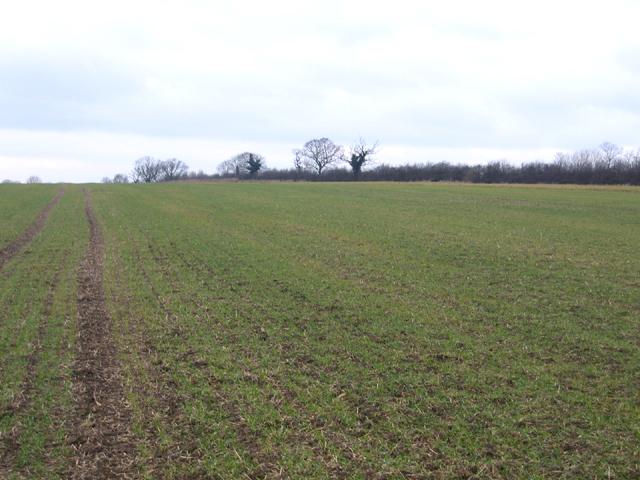 Farmland S of Hardwick, Cambs