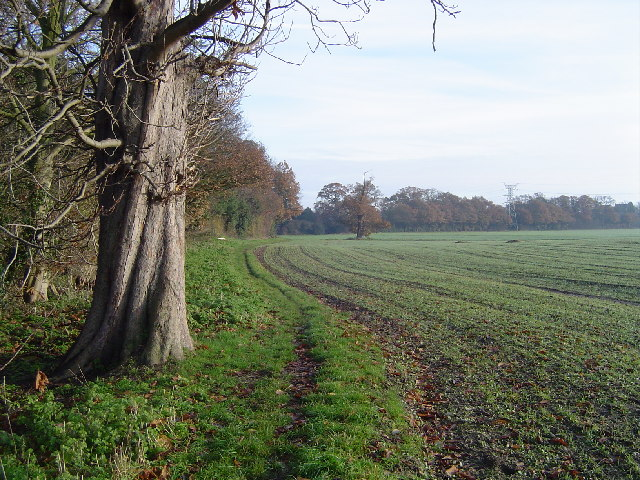 Letchmore Heath: The footpath from Patchetts Green