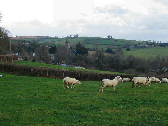 Sheep at Mill Cross, Rattery - Devon