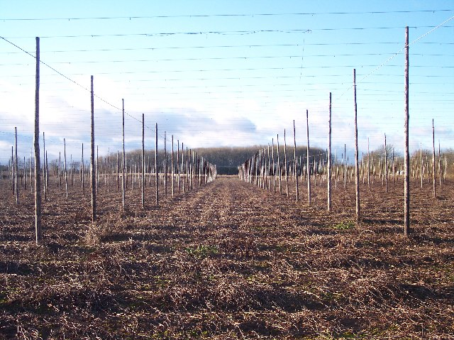 Bromtree's Coppice viewed through Hop Poles