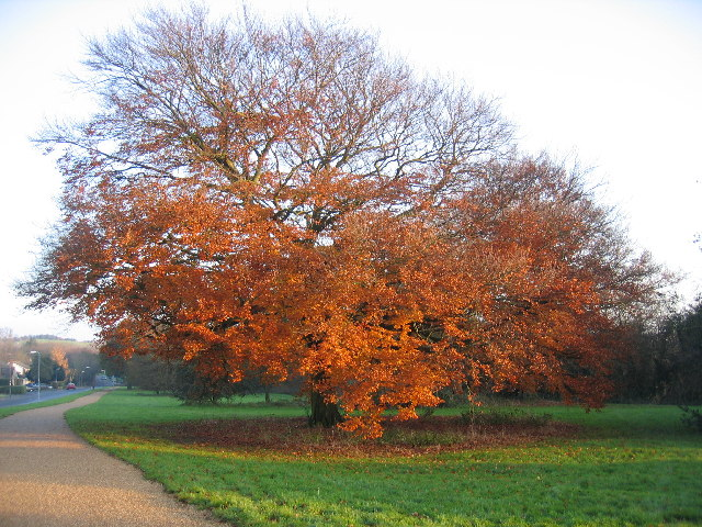Autumn on the Millennium Way