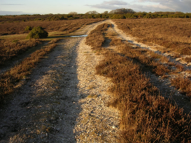Eroded path across Setley Plain, New Forest