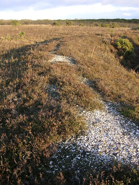 Bank of overlapping disc barrows on Setley Plain, New Forest