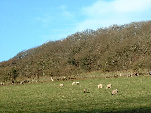 Grazing near Wolverton