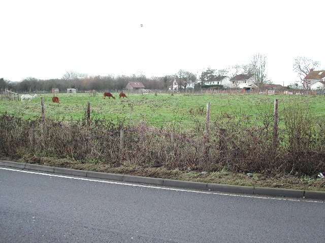Alpacas graze in the hamlet of Stock