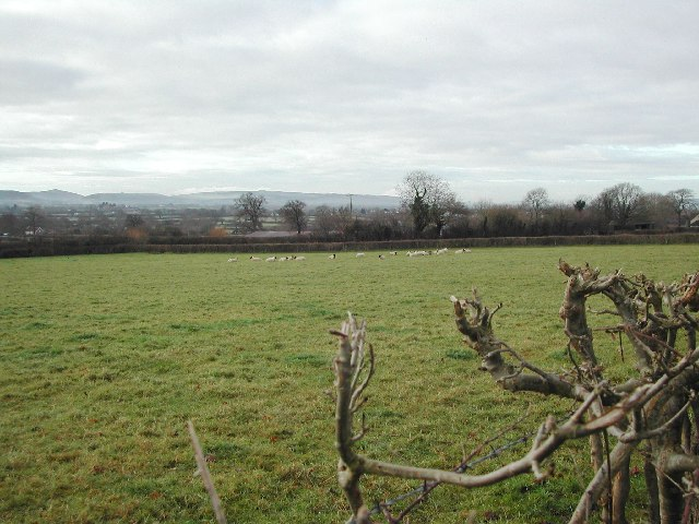 From the Wrington Road - typical farmland
