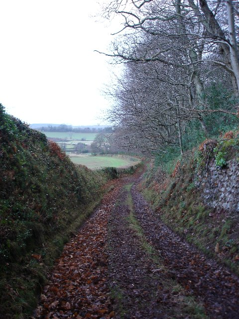 Permissive path alongside Black Down Wood