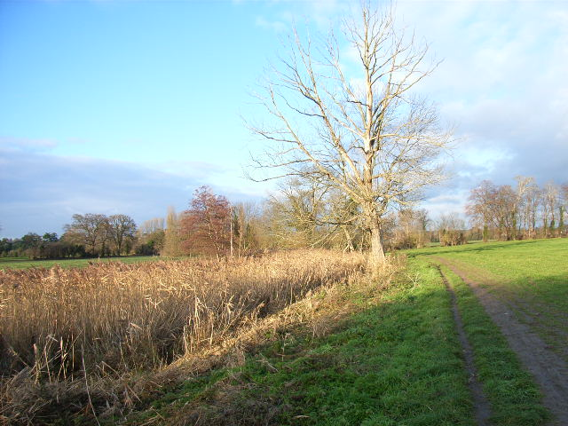 Reedbeds and farmland next to Strand Water