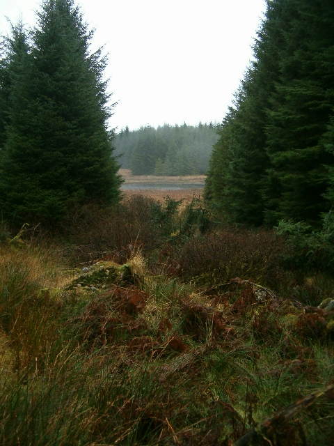 Forest view to Loch a Mhinn