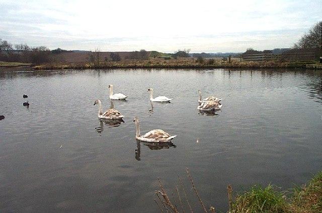 Cuckney Dam