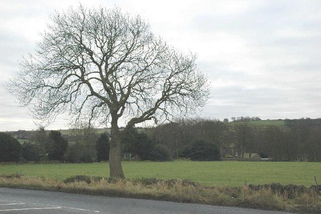 Winter Ash tree near Upper Cumberworth