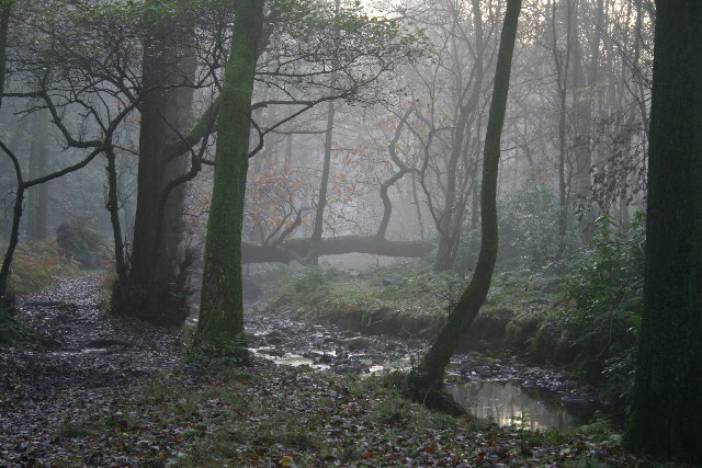 Evening, Holme Wood