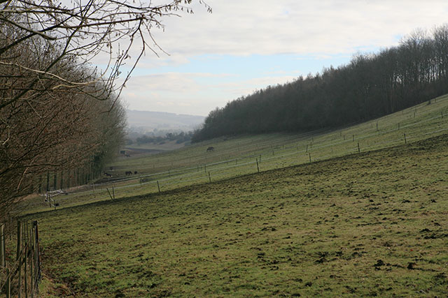 Horses at livery above Allens Farm, Corhampton