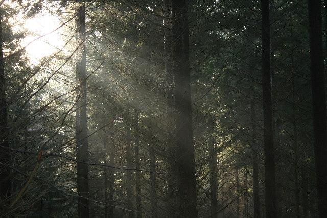 Winter Sunlight in Commonty Wood