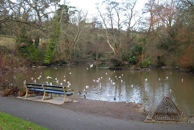 Duck pond near boscawen park tony atkin geograph for Duck pond water