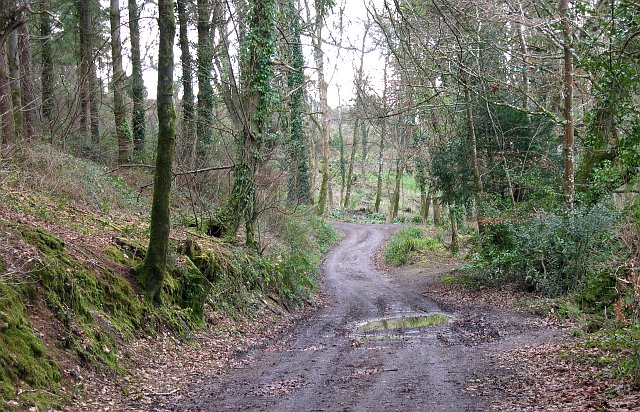 Woodland near Kiggon