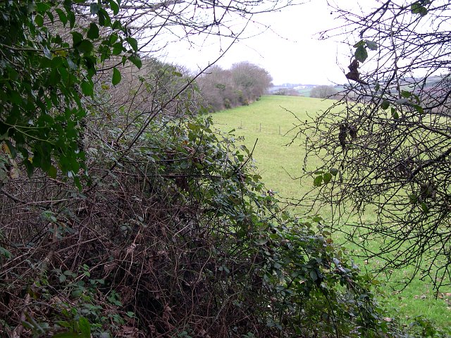 A Glimpse through the Hedge