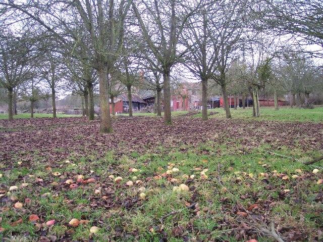 Grove Farm and Apple Orchard