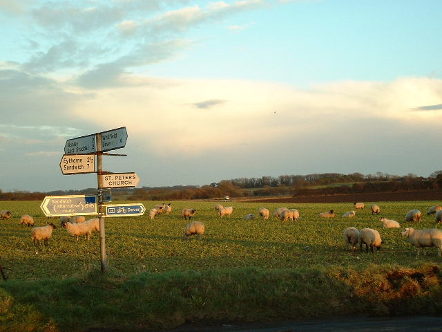 Sheep near St Peters