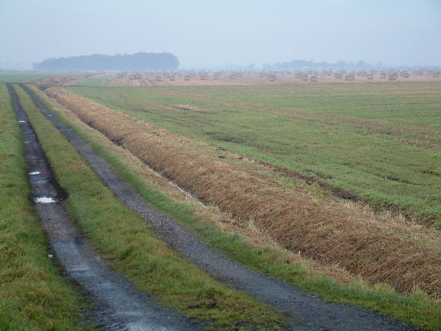 Distant Hay
