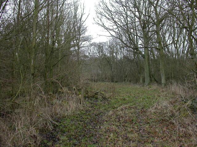 Keysoepark Wood
