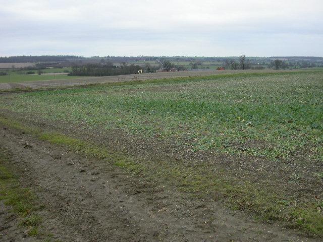 View towards Coldham Lodge Farm