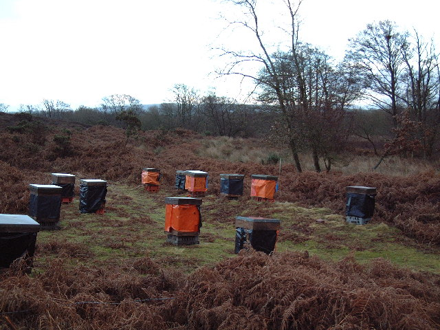 Bee Hives on Middlebere Heath