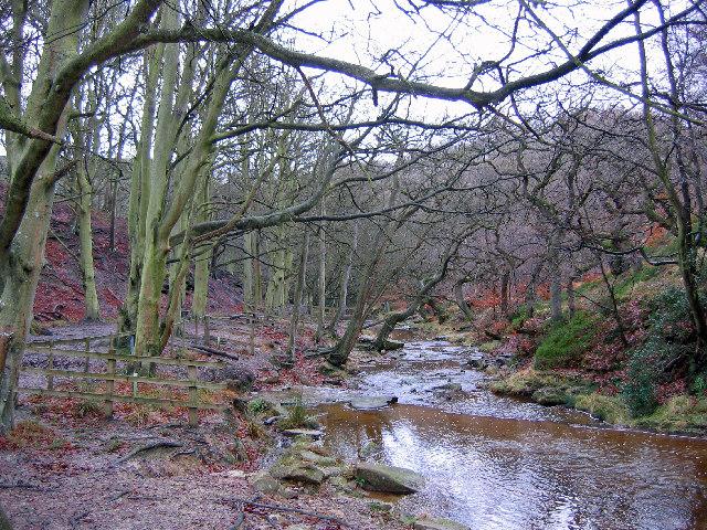Morra Head Wood