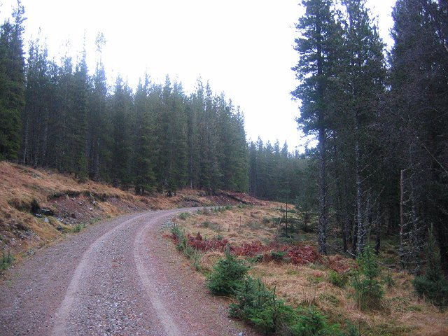 Auchteraw Woods.