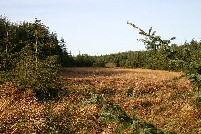 Red Moss, Cockley Moor